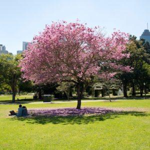 Brisbane-Botanical-garden